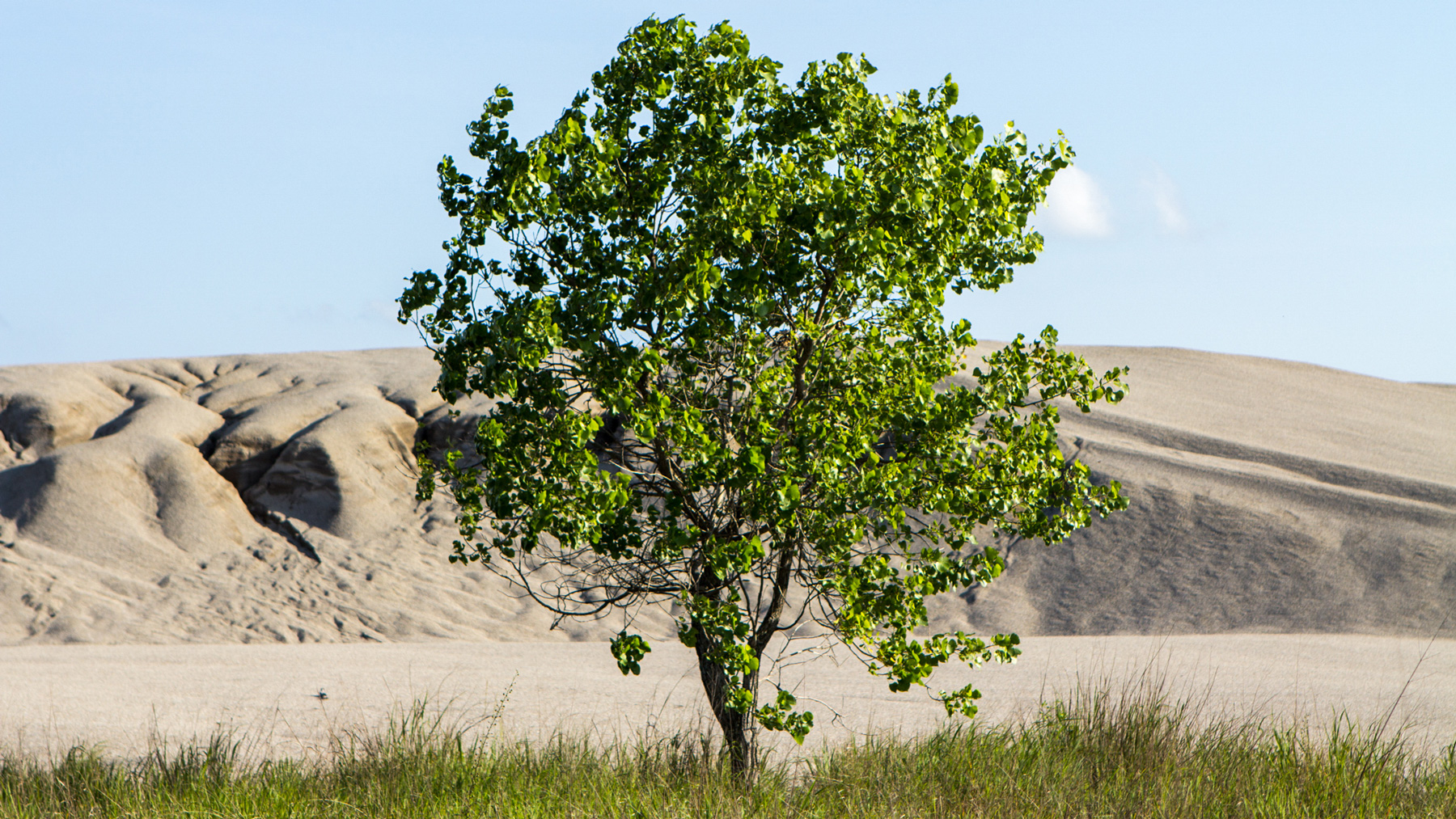 A tree stands in front of a 	&#8220chat&#8221 pile, or dust contaminated with lead from mining, at the Tar Creek Superfund site in Picher, Okla. The site was one of the original Superfunds listed in 1983, yet work continues to clean up the drinking water in the area. (Jasmine Spearing-Bowen/News21)